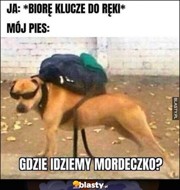 Ja: biorę klucze do ręki, mój pies: gdzie idziemy mordeczko?