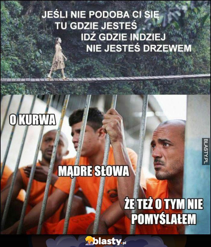 Jeśli nie podoba ci się tu gdzie jesteś idź gdzie indziej, nie jesteś drzewem, w więzieniu: mądre słowa, że też o tym nie pomyślałem
