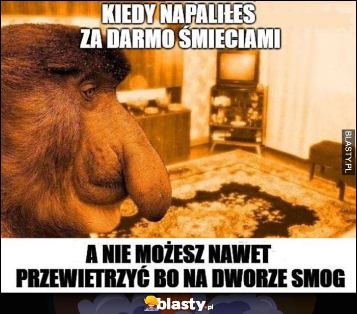 Kiedy napaliłeś za darmo śmieciami, a nie możesz nawet przewietrzyć bo na dworze smog nosacz małpa smutny