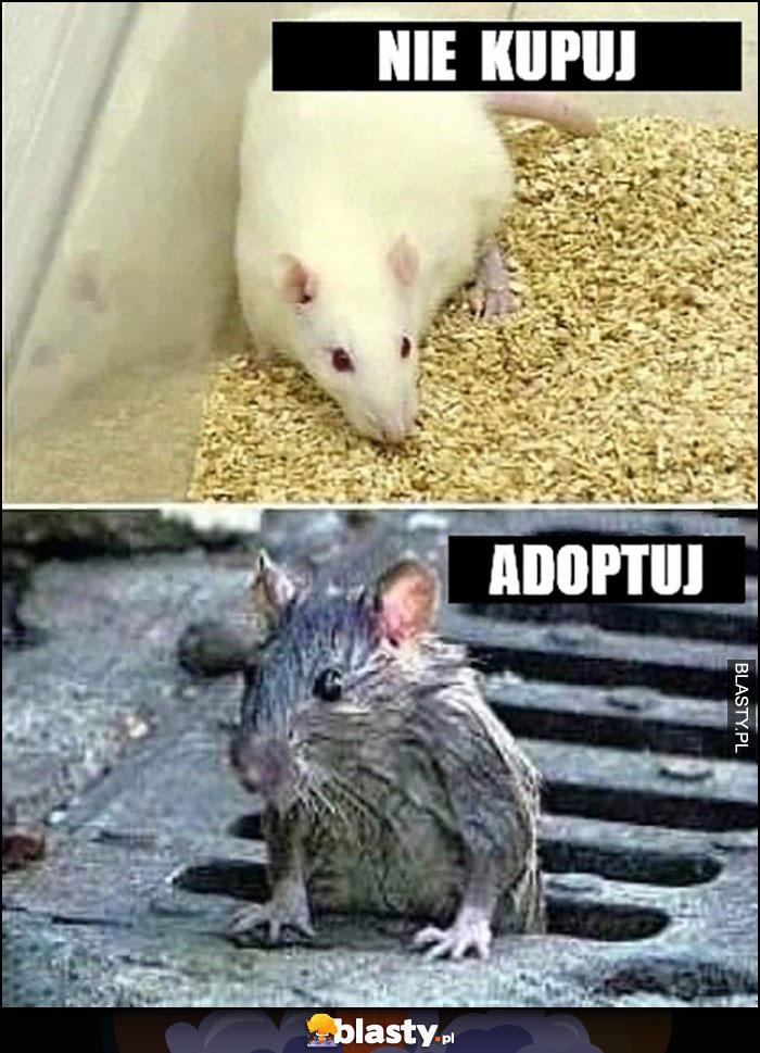 Nie kupuj myszy adoptuj szczura