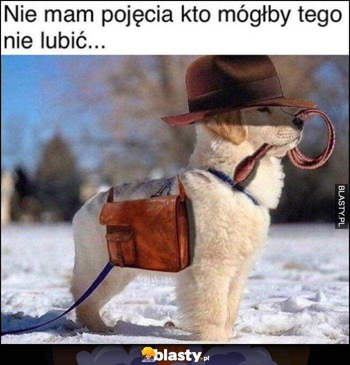 Nie mam pojęcia kto mógłby tego nie lubić pies piesek Indiana Jones przebranie