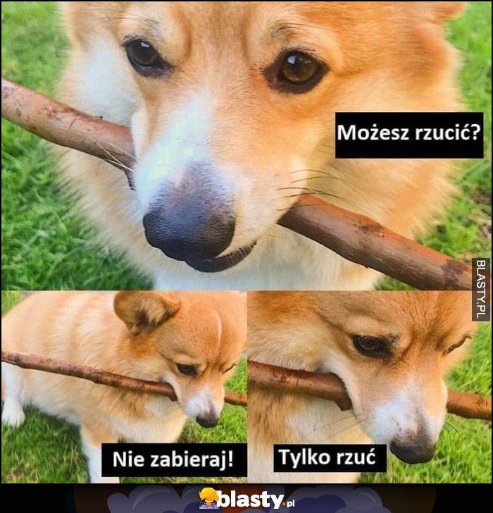 Pies kijek patyk możesz rzucić? Nie zabieraj tylko rzuć