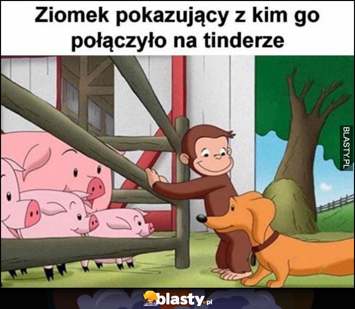 Ziomek pokazujący z kim go połączyło na tinderze świnie lochy
