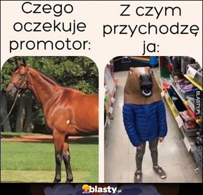 Czego oczekuje promotor vs z czym przychodzę ja koń konie