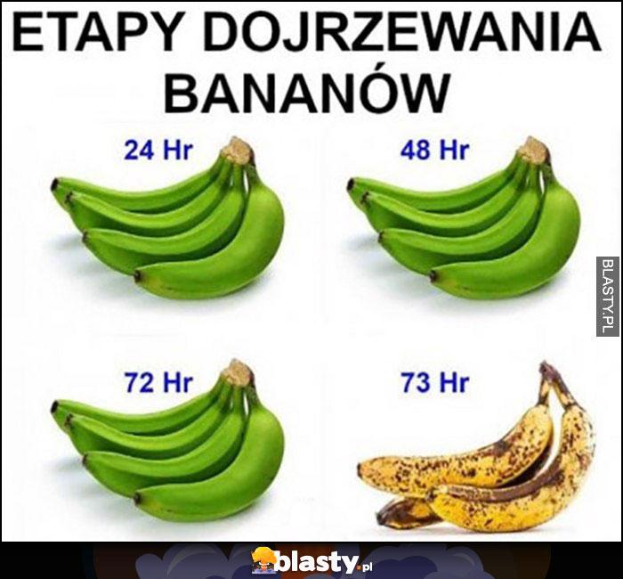 Etapy dojrzewania bananów zielone a potem od razu brązowe