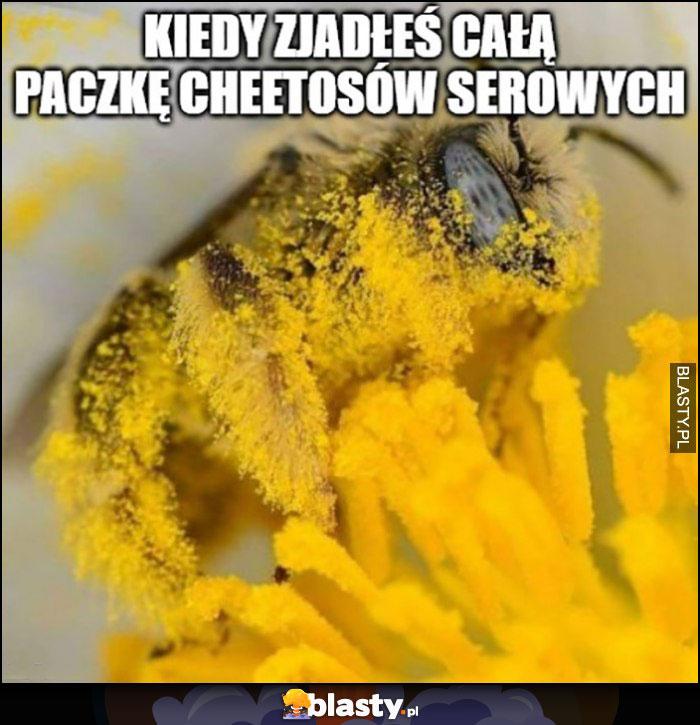 Kiedy zjadłeś paczkę cheetosów serowych osa pszczoła pylenie