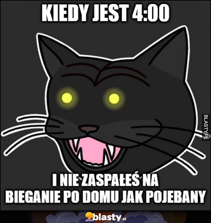 Kot kiedy jest 4:00 w nocy rano i nie zaspałeś na bieganie po domu jak nienormalny