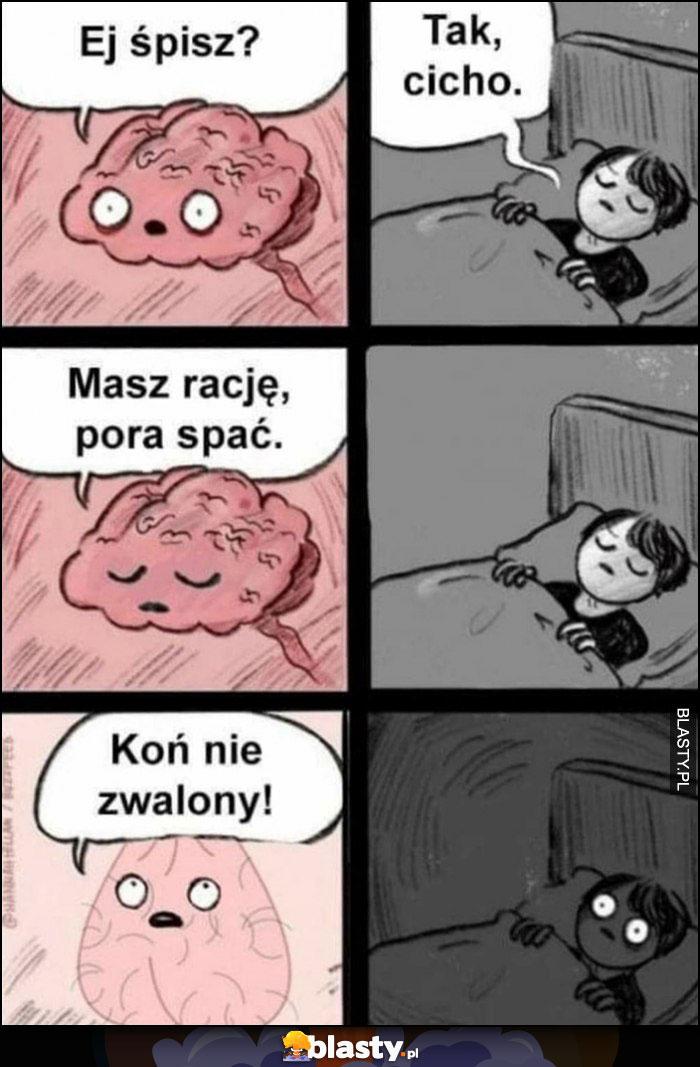 Mózg: ej śpisz? Tak cicho, koń nie zwalony budzi się komiks