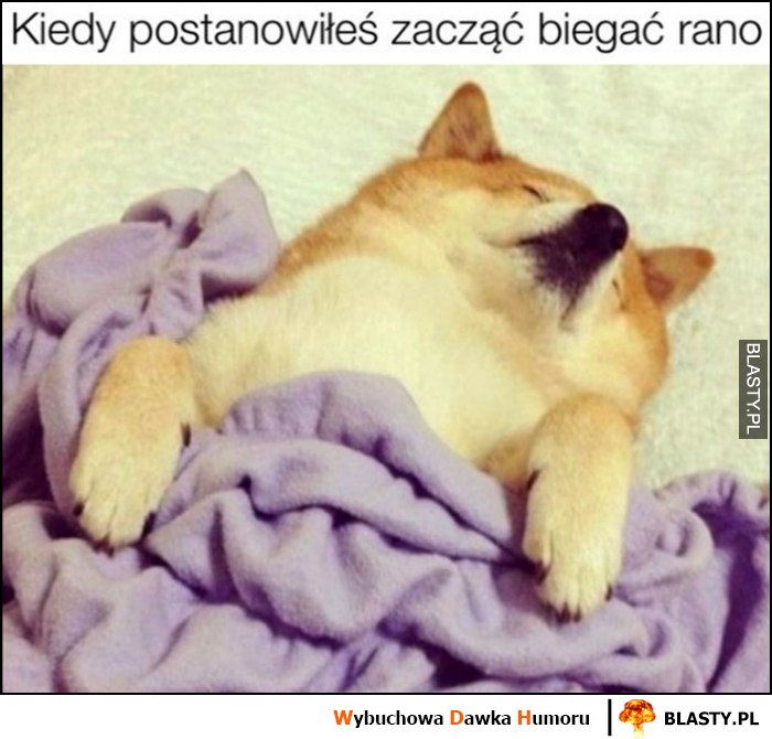 Pies śpi kiedy postanowiłeś zacząć biegać rano