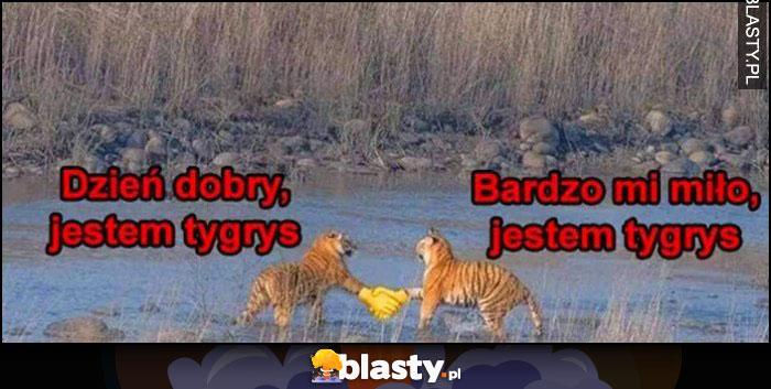 Dzień dobry, jestem tygrys, bardzo mi miło, jestem tygrys witają się emotka ikonka
