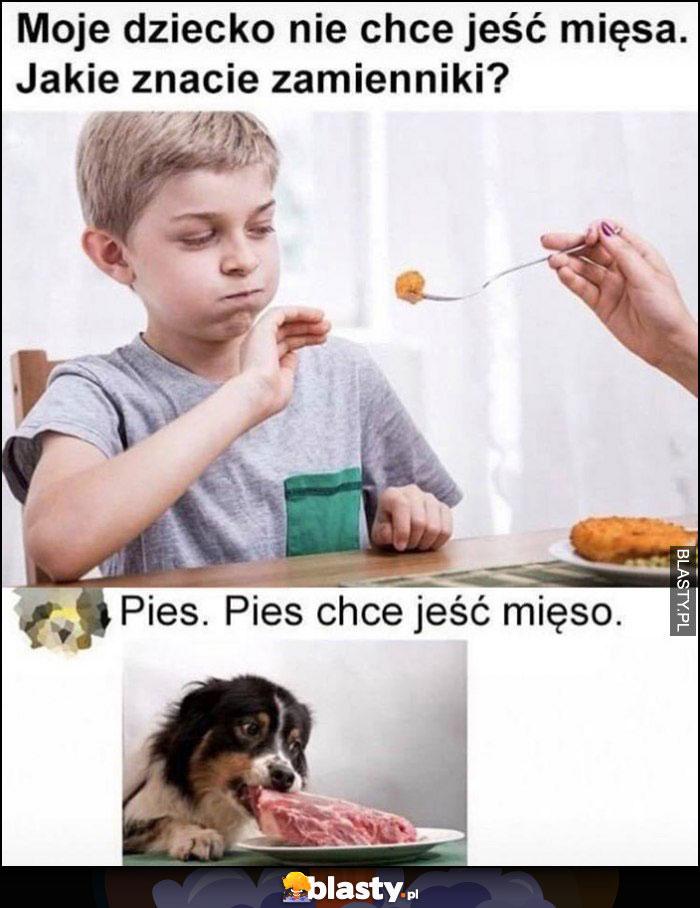 Moje dziecko nie chce jeść mięsa, jakie znacie zamienniki, pies, pies chce jeść mięso