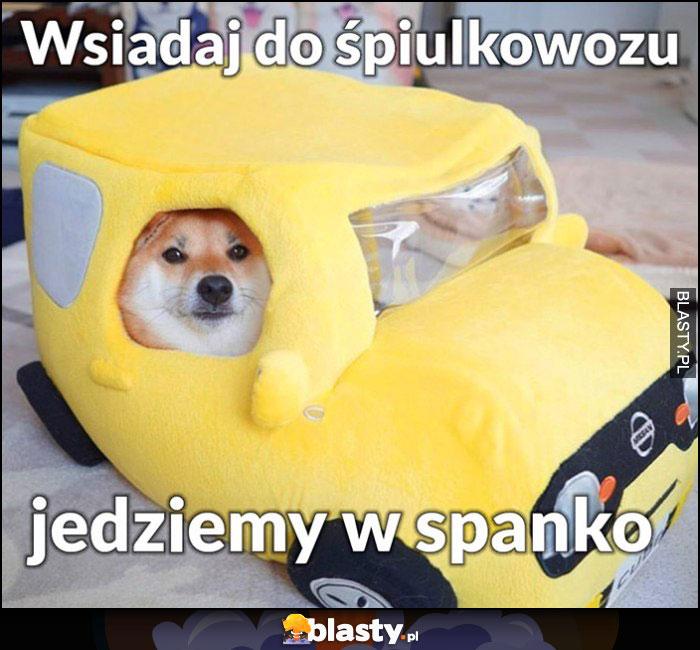 Pies pieseł doge wsiadaj do śpiulkowozu jedziemy w spanko