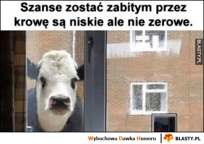 Szanse zostać zabitym przez krowę są niskie ale nie zerowe