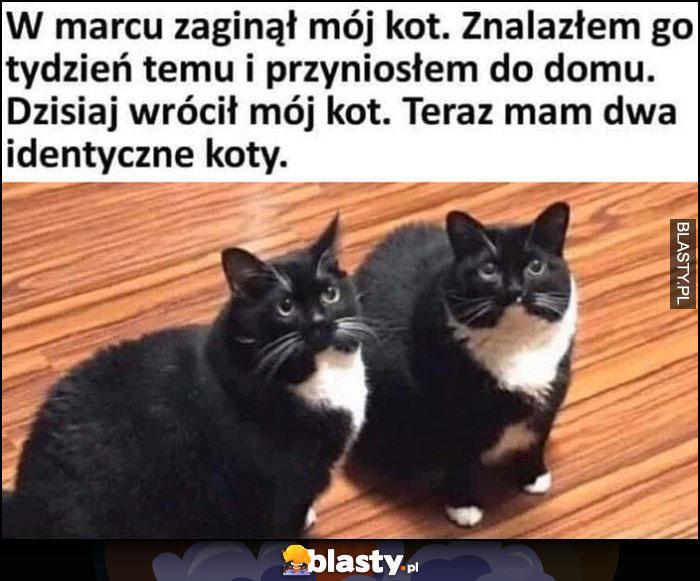 Zaginął mój kot, znalazłem go tydzień temu i przyniosłem do domu, dzisiaj wrócił mój kot, teraz mam dwa identyczne koty