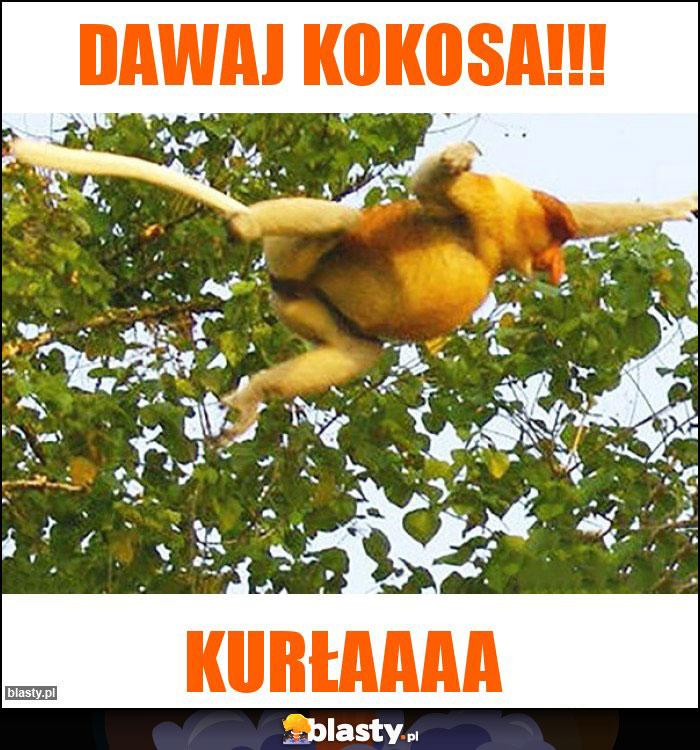 Dawaj kokosa!!!