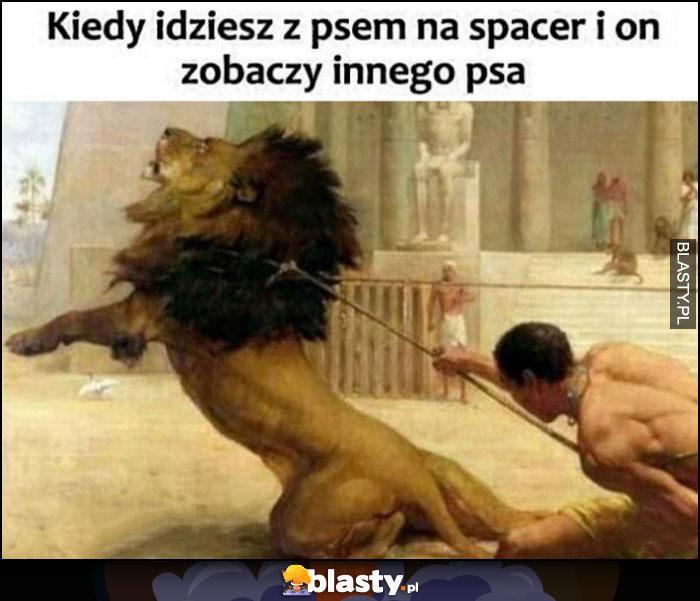 Kiedy idziesz z psem na spacer i on zobaczy innego psa facet trzyma lwa