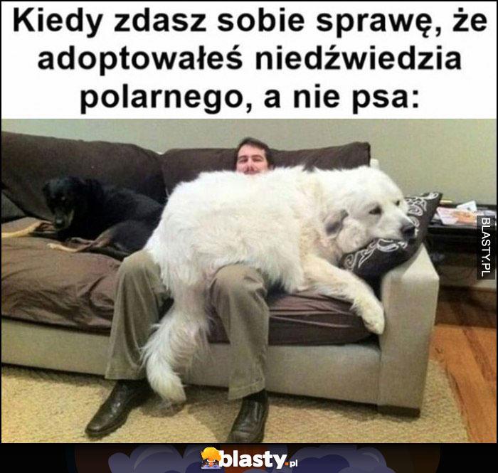 Kiedy zdasz sobie sprawę, że adoptowałeś niedźwiedzia polarnego, a nie psa wielki