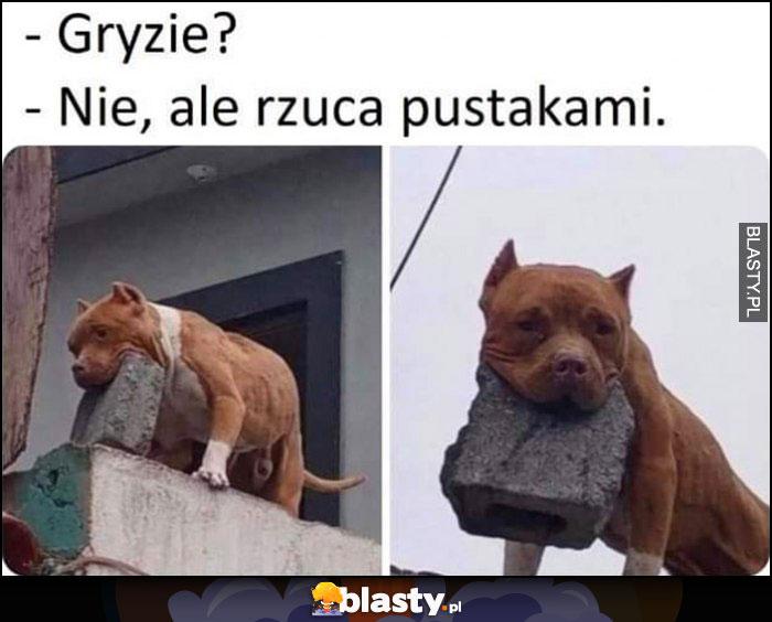 Pies, gryzie? Nie, ale rzuca pustakami