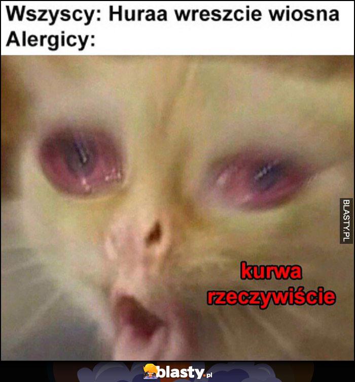 Wszyscy: huraa wreszcie wiosna, alergicy: kurna rzeczywiście kot