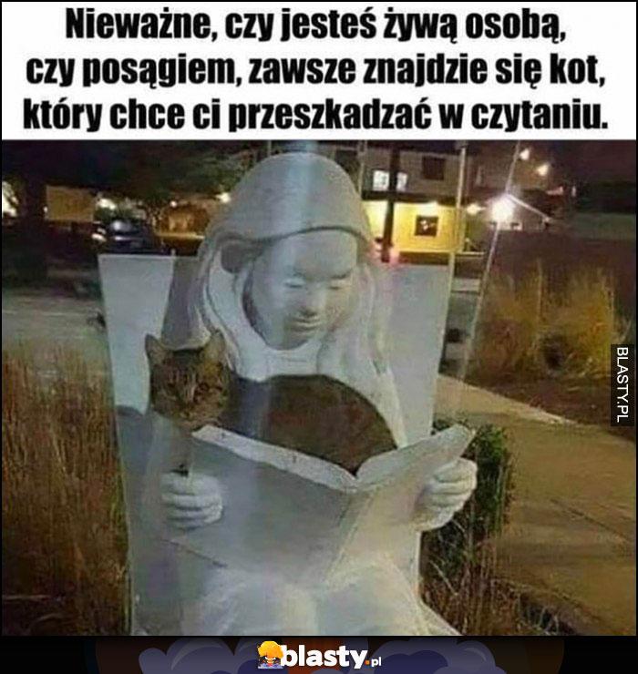 Nieważne czy jesteś żywą osobą czy posągiem, zawsze znajdzie się kot, który chce ci przeszkadzać w czytaniu