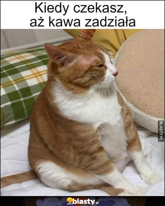 Kiedy czekasz aż kawa zadziała kot siedzi