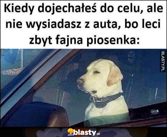 Pies kiedy dojechałes do celu ale nie wysiadasz z auta bo leci zbyt fajna piosenka