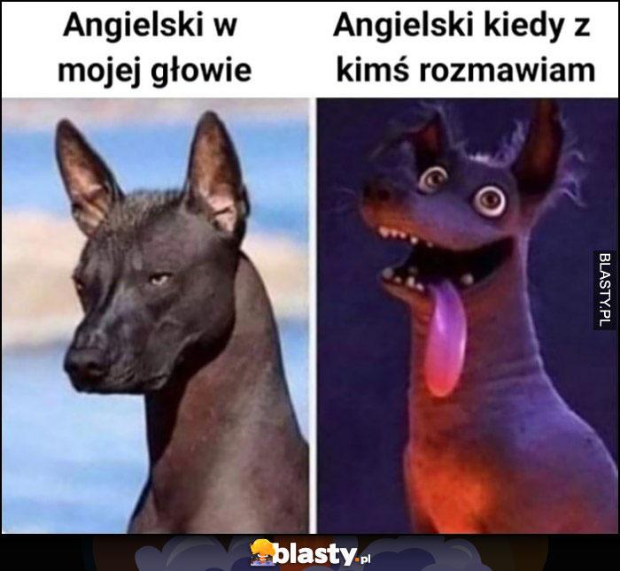 Angielski w mojej głowie vs angielski kiedy z kimś rozmawiam pies hiena porównanie