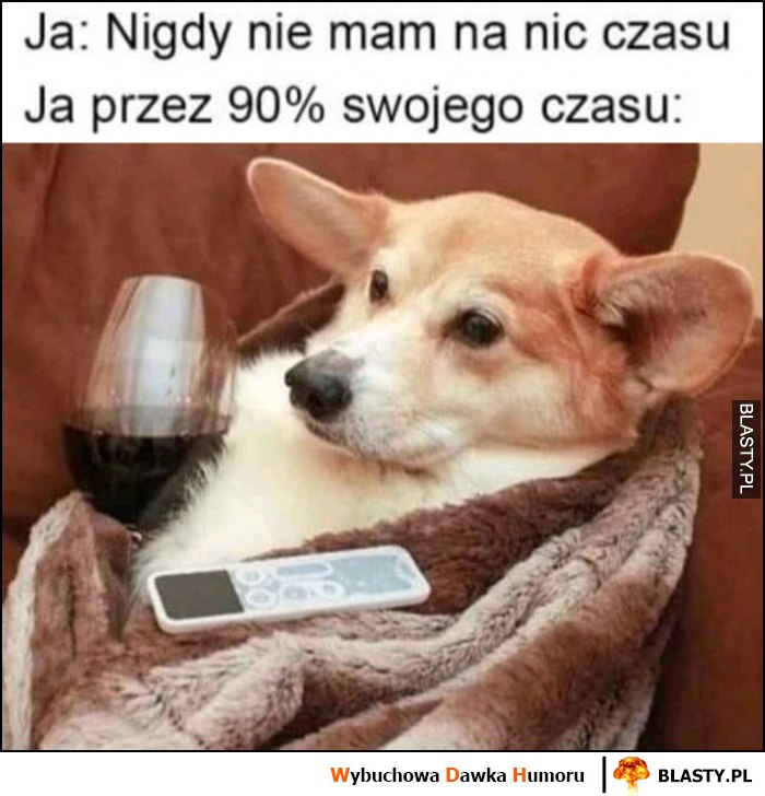 Ja: nigdy nie mam czasu na nic, ja przez 90% swojego czasu pies z winem przed telewizorem