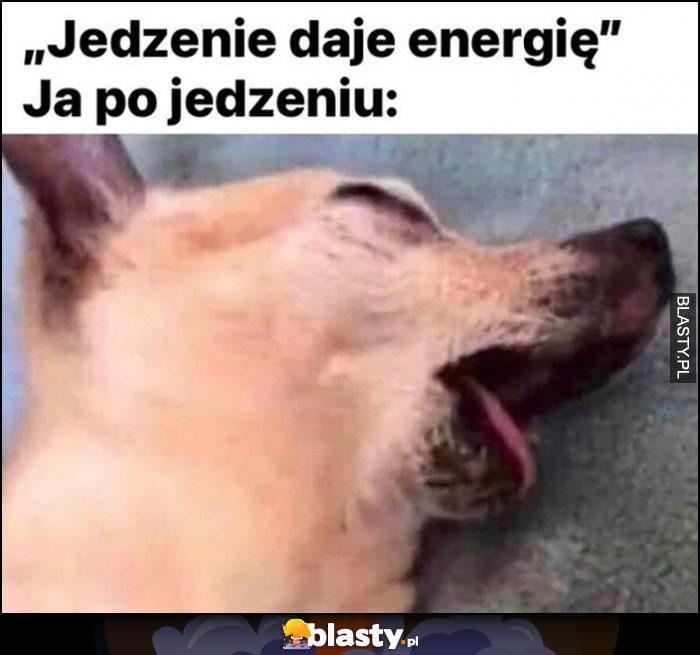 Jedzenie daje energię, ja po jedzeniu zmęczony pies śpi