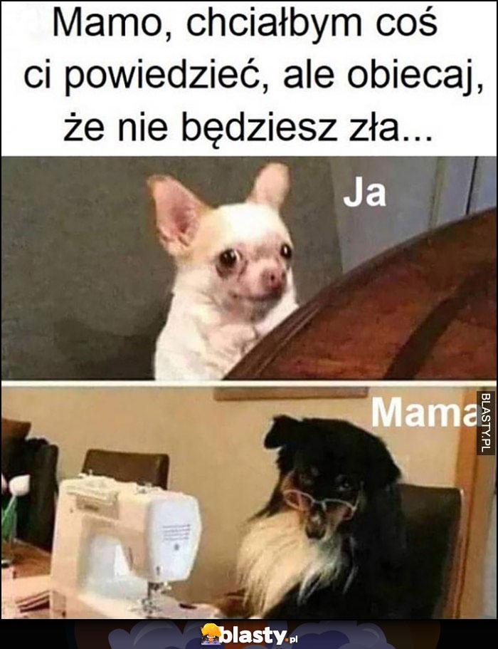 Mamo chciałbym coś ci powiedzieć, ale obiecaj że nie będziesz zła ja mama pies psy
