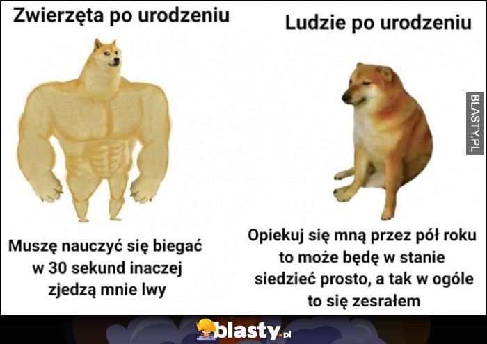 Zwierzęta po urodzeniu vs ludzie po urodzeniu porównanie pies pieseł doge