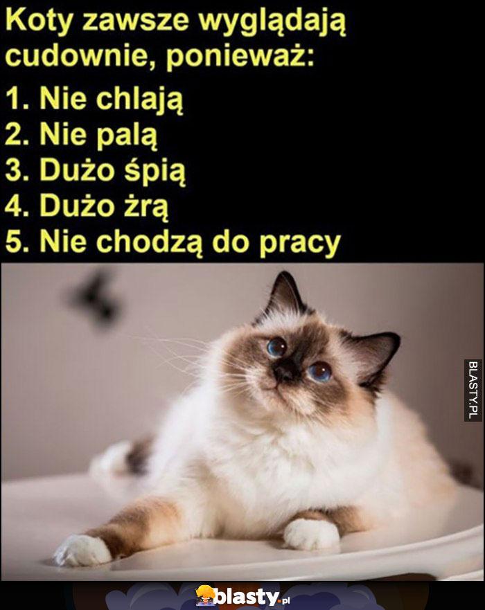 Koty zawsze wyglądają cudownie ponieważ: nie chleją, nie palą, dużo śpią, dużo żrą, nie chodzą do pracy