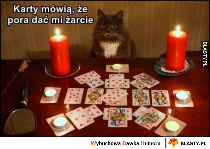 Karty mówią, że pora dać mi żarcie kot wróżba tarot