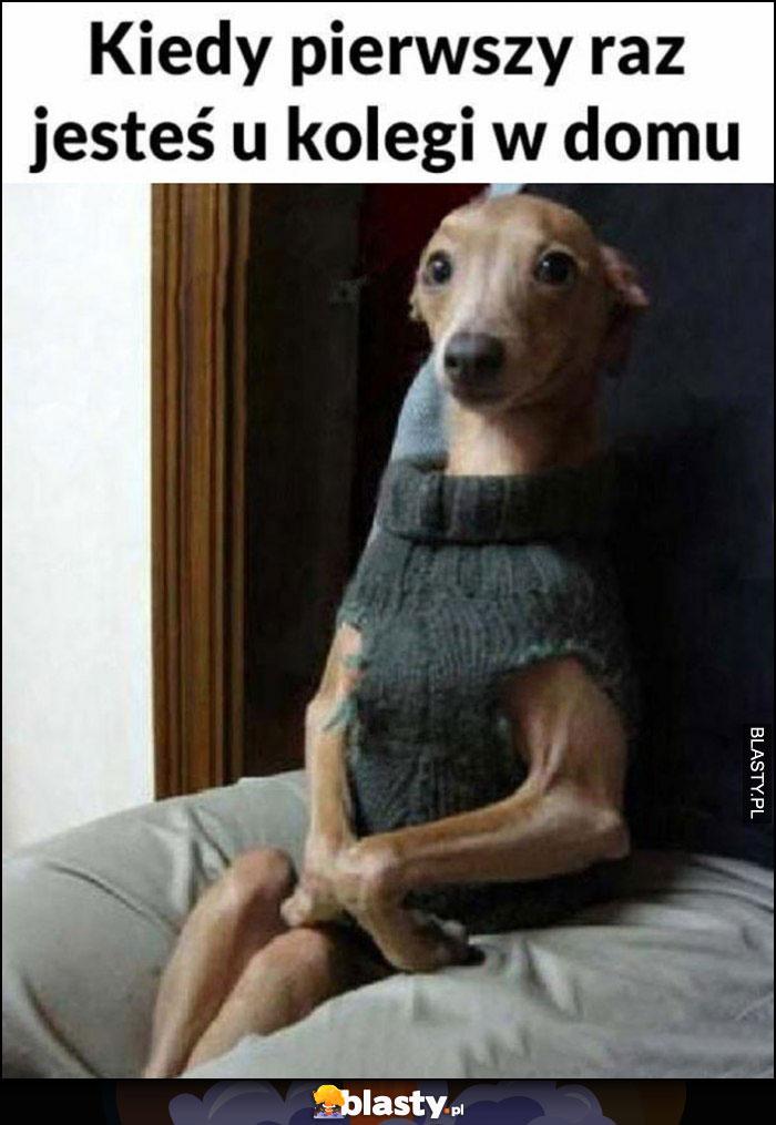 Kiedy pierwszy raz jesteś u kolegi kulturalny pies piesek