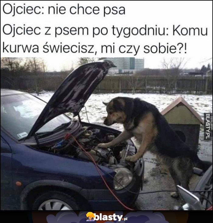 Ojciec: nie chcę psa, ojciec z psem po tygodniu: naprawa auta, komu świecisz, mi czy sobie?