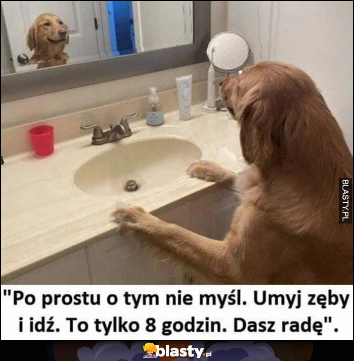 Pies przed pracą patrzy w lustro: po prostu o tym nie myśl, umyj zęby i idź to tylko 8 godzin, dasz radę