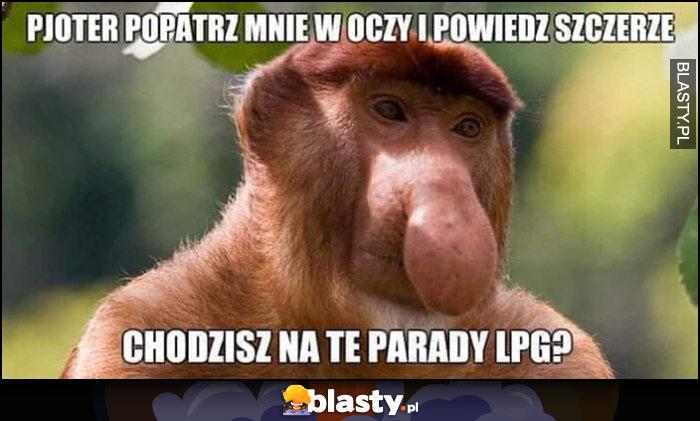 Pjoter popatrz mnie w oczy i powiedz szczerze chodzisz na te parady LPG? małpa nosacz