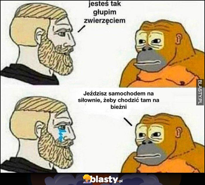 Człowiek do małpy: jesteś tak głupim zwierzęciem, małpa do człowieka: jeździsz samochodem na siłownię, żeby chodzić tam na bieżni