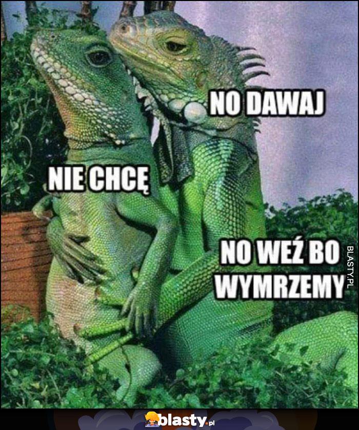 Kameleony, no dawaj, nie chcę, no weź bo wymrzemy