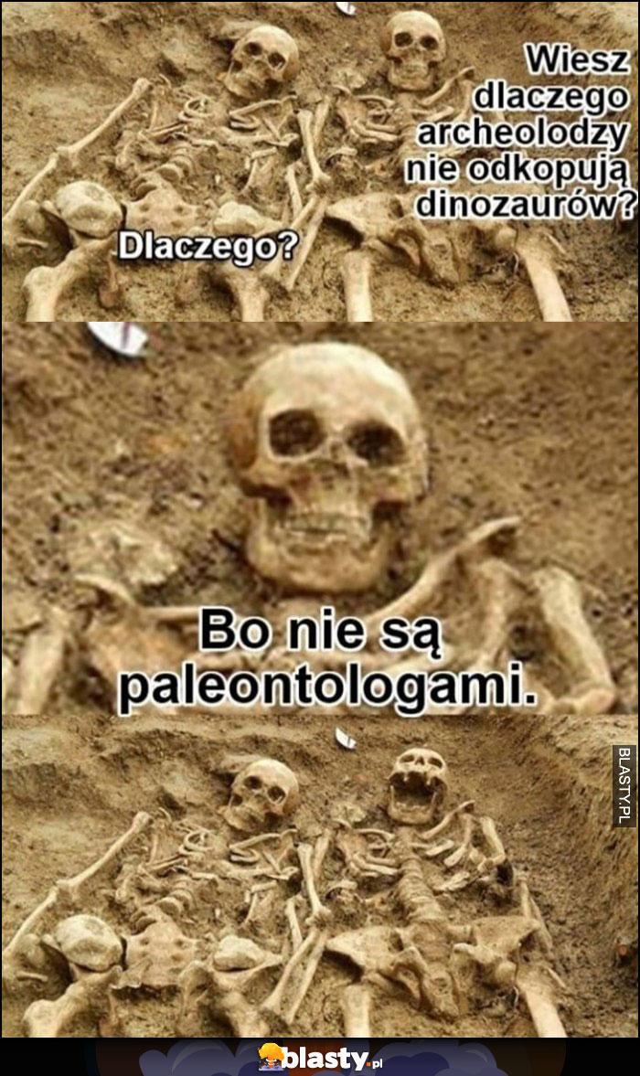 Kościotrupy: wiesz dlaczego archeolodzy nie odkopują dinozaurów? Bo nie są paleontologami