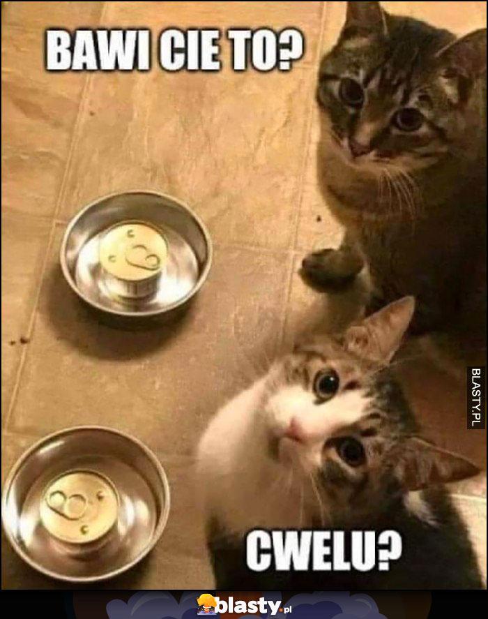 Koty nie otwarte puszki w miskach, bawi cię to cwelu?