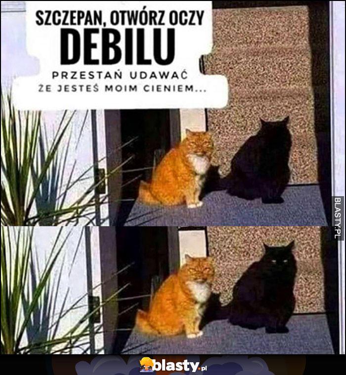 Koty Szczepan debilu otwórz oczy, przestań udawać, że jesteś moim cieniem