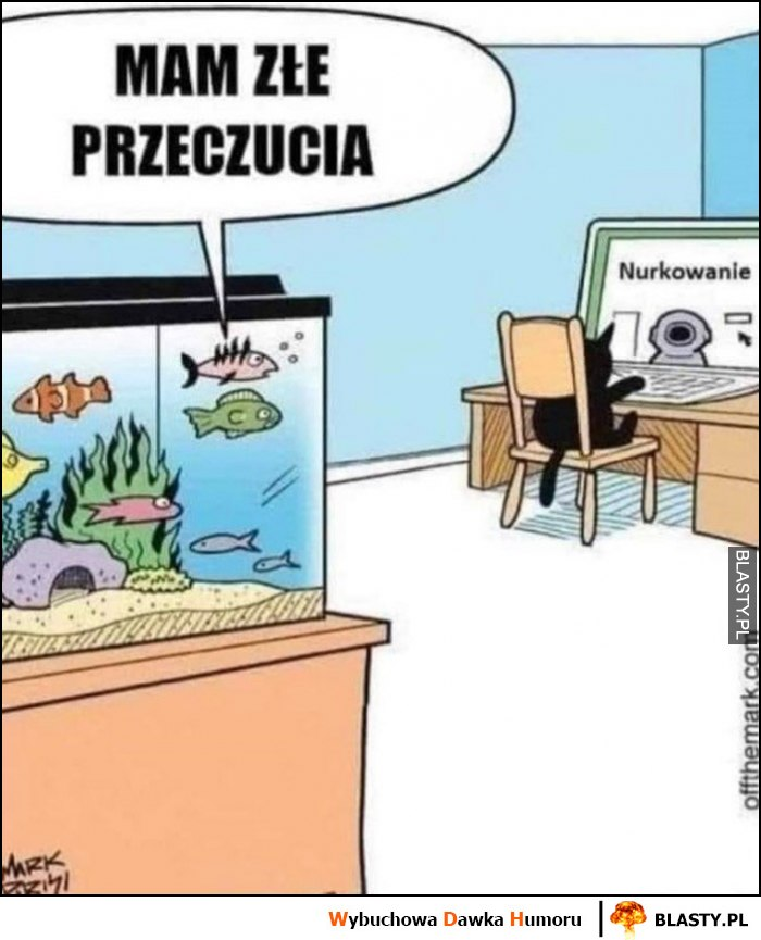 Ryby mam złe przeczucia kot wyszukuje jak nurkować
