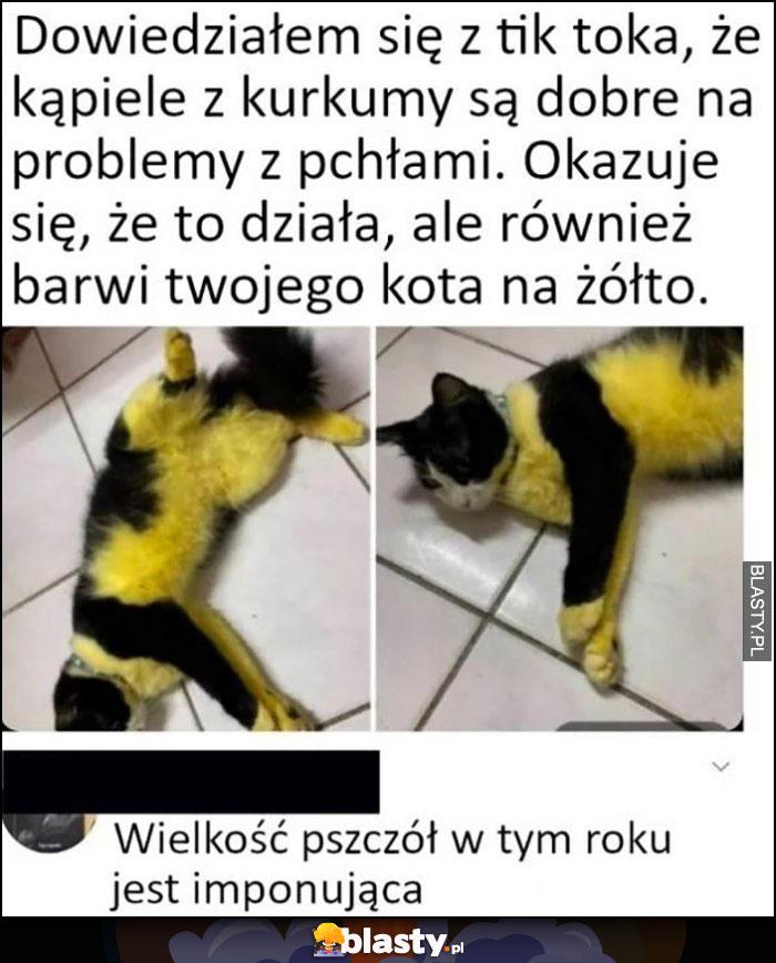 Kąpiele z kurkumy są dobre na problemy z pchłami, okazuje się że również barwią kota na żółto