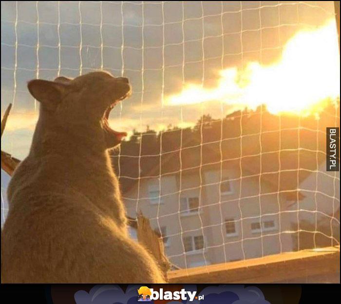 Kot ziewa jakby zionął ogniem ciekawe kreatywne zdjęcie